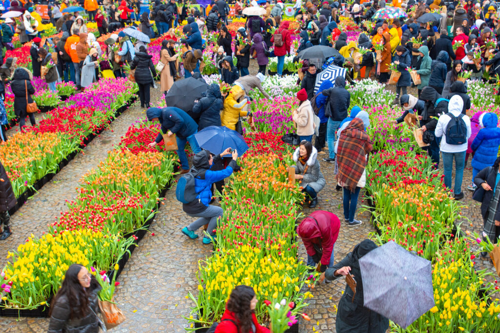 Tourists visit a tulip festival in central Amsterdam.